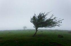 wiatr.jpg